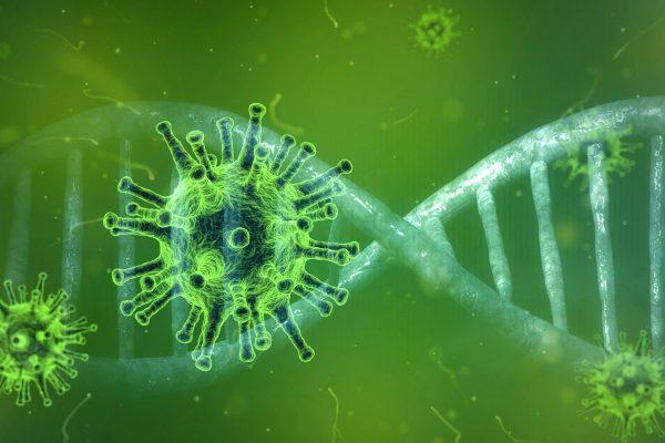 Virus und DNA